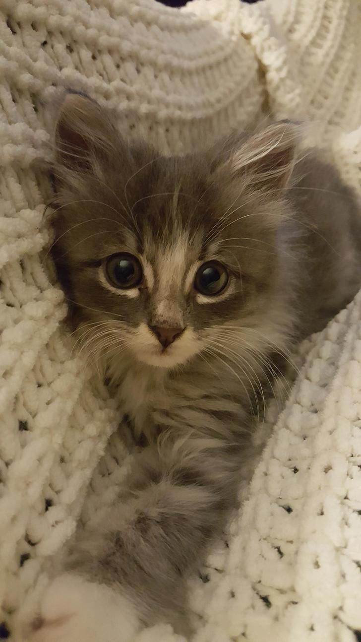 Ankle Biter Imgur Pinterestbob S Daily Blog Thursday Release You Ve Just Got To Believe That He S Done It And It S Do Cats Cute Baby Animals Kittens Cutest
