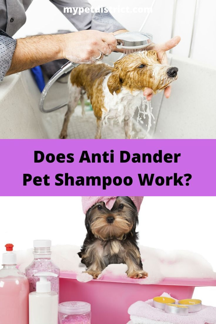 Top 3 Anti Dander Pet Shampoos For Allergy Relief In 2019 Keep Your Pets Dog Allergies Pet Shampoo Flea Shampoo For Dogs