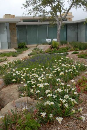 Reimagining-lawn-modern