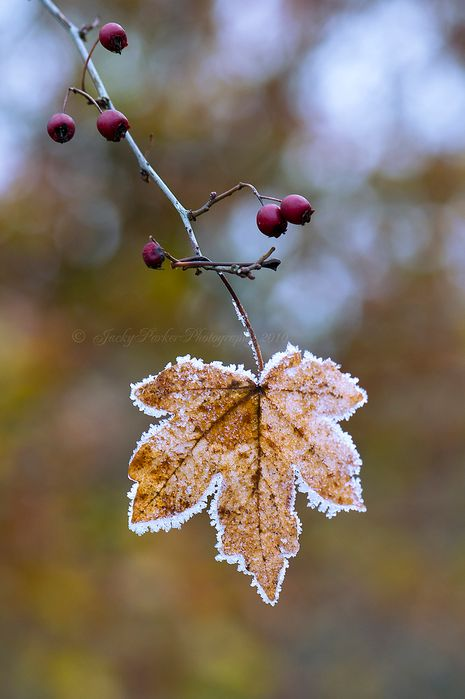 """""""Autumn is a second spring when every leaf is a flower."""" ~ Albert Camus"""