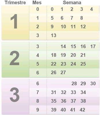 ¡No pierdas tu cuenta! Calendario del #embarazo mes a mes y semana a semana