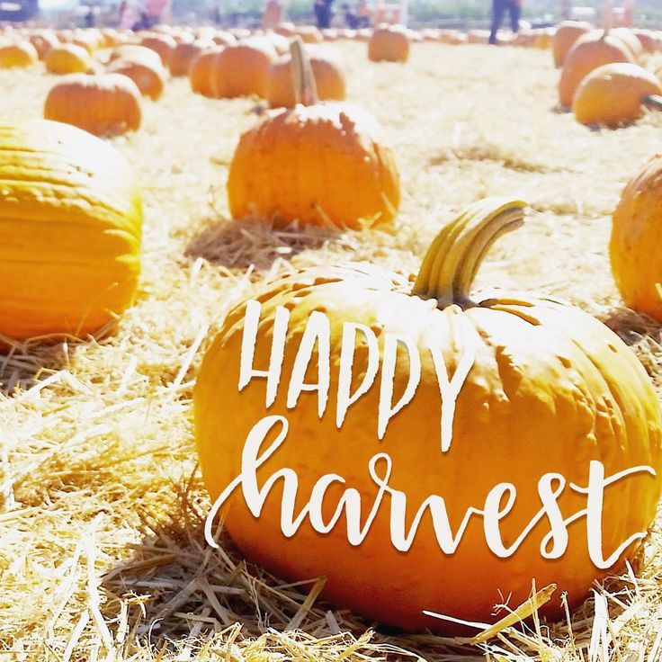 Tis the pumpkin season!  Photo taken at a local pumpkin patch in San Jose! Day 233/365. #sparkletters #handlettering #handletteringtype #lettering #writing #calligraphy #cursive #doodles #type #typeface #typography #word #thedesigntip #thedailytype #typedaily #wordoftheday #photooftheday #365daysofhandlettering #pumpkinspicelatte #pumpkin #fall #autumn #pumpkinpatch #ilovepumpkins