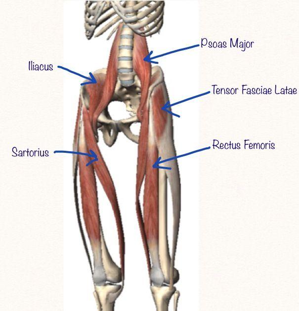 Human Body Anatomy | Ragil | Pinterest | Hip flexors ...