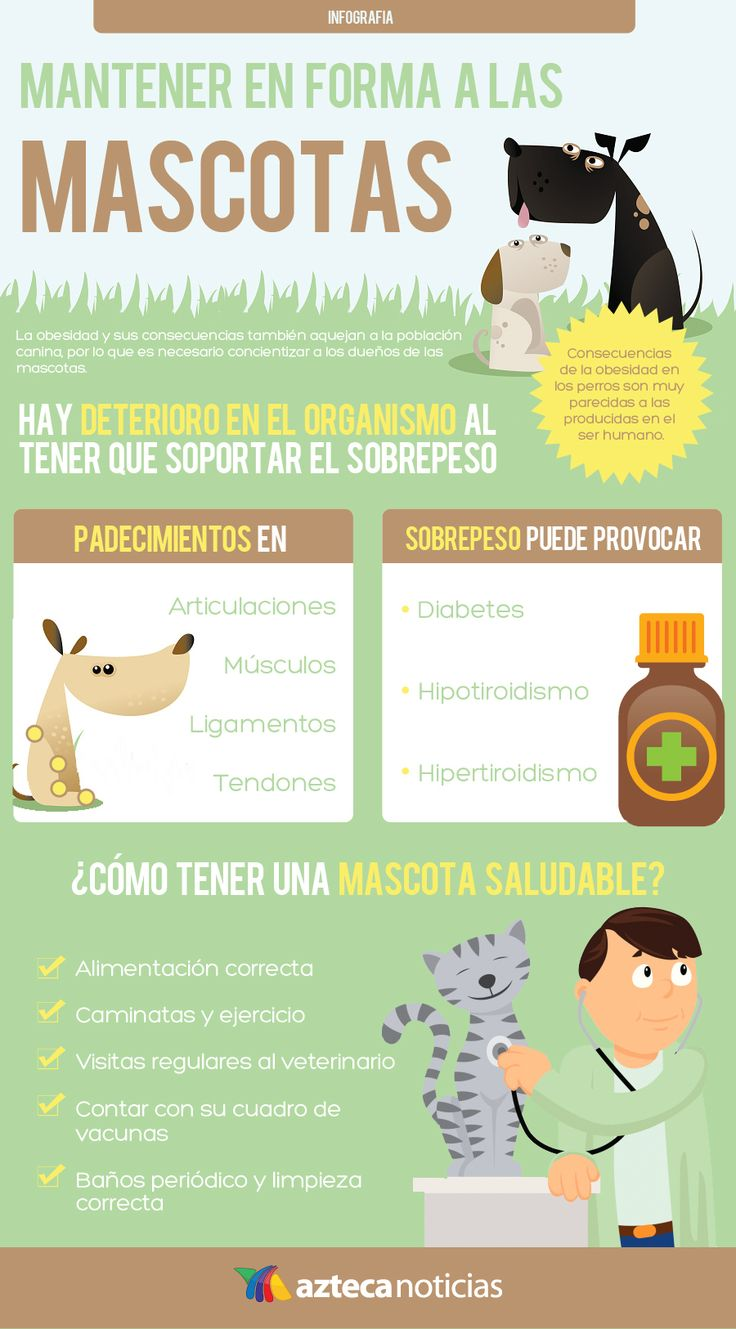 Mantener en forma a las mascotas #infografia