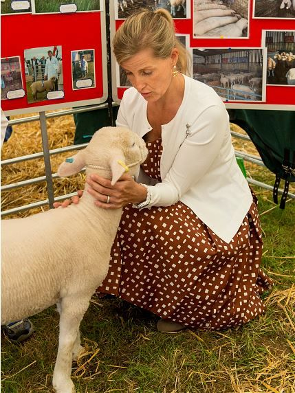 Sophie, Countess of Wessex views some sheep during a visit to the New Forest show on July 26, 2016 in Brockenhurst, England.