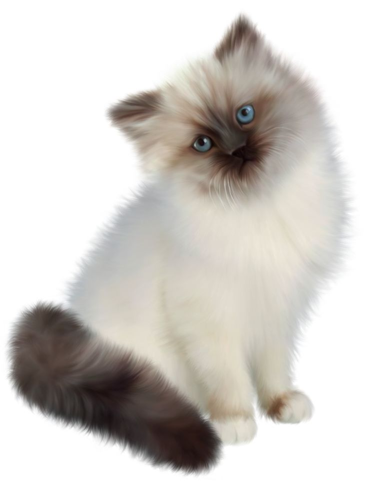 Kitten Transparent PNG Clipart