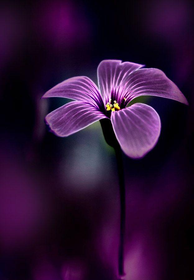 Жизнь в цвете (Фото Подборки) | VK