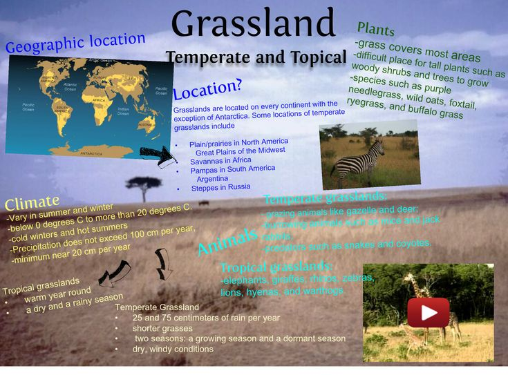 16 Best Kristin's Grassland Shoebox Project Ideas Images On
