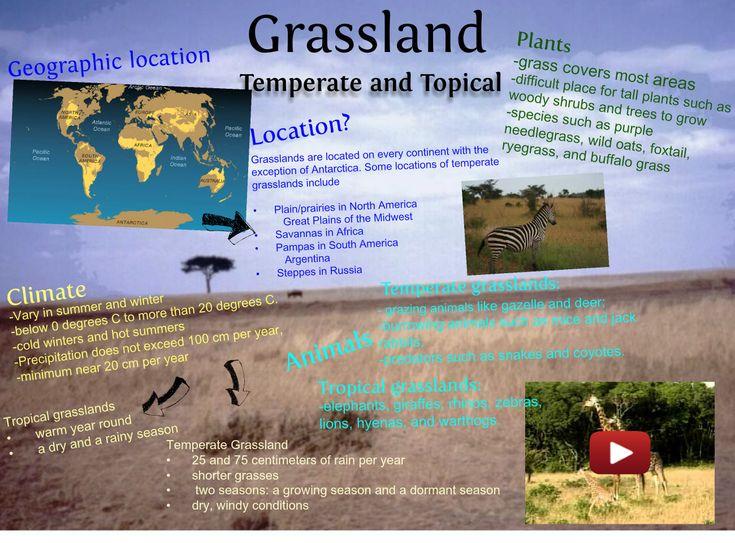 grassland shoebox project