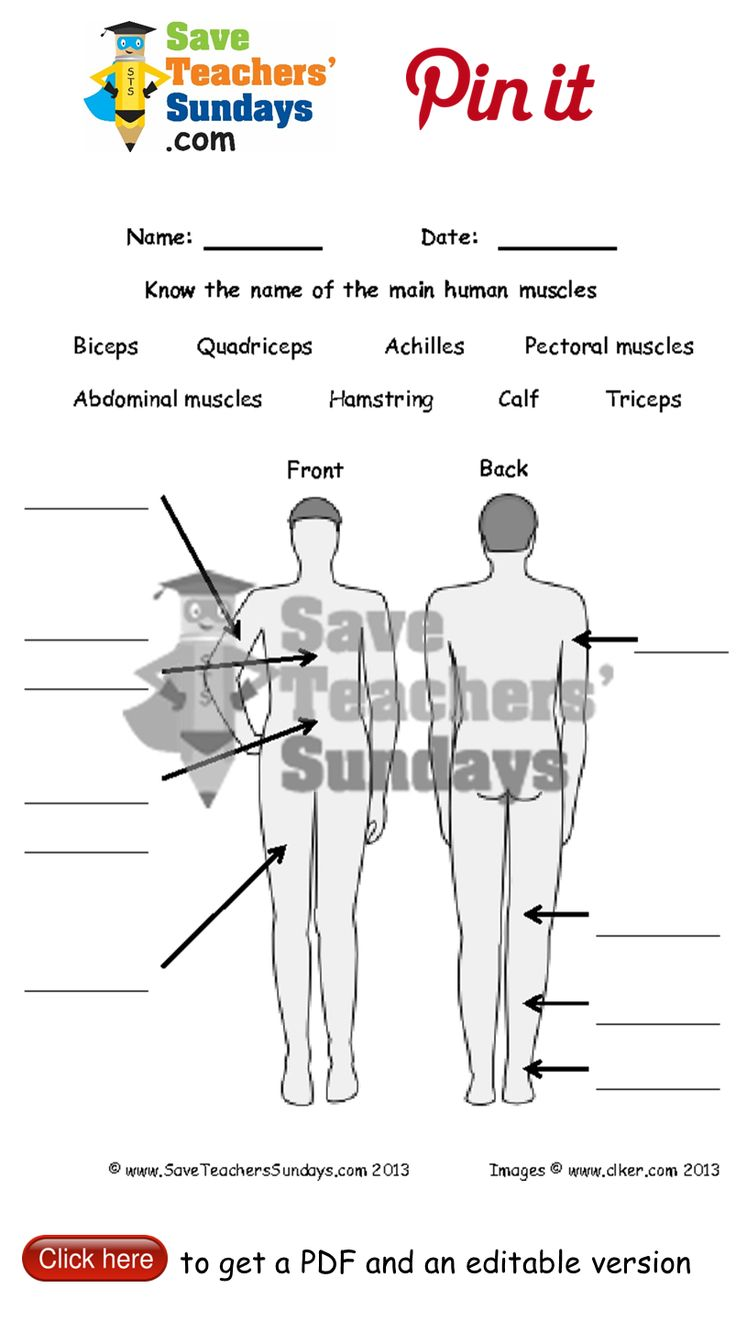 Label the muscles worksheet. Go to http://www.saveteacherssundays.com/science/year-3/327/lesson-6-human-muscles/ to download this Label the muscles worksheet. #SaveTeachersSundaysUK