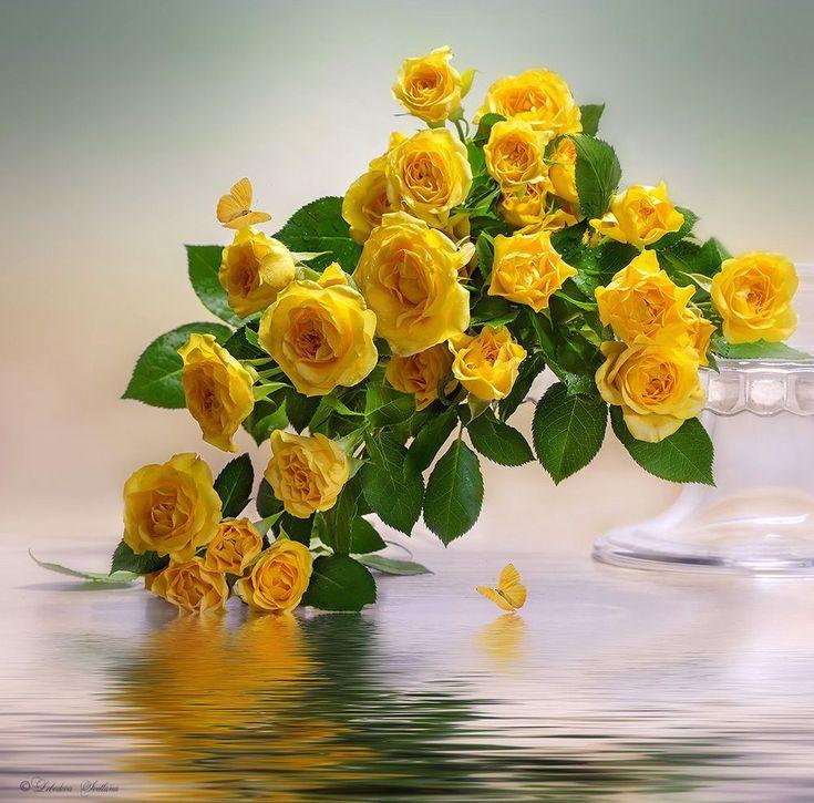 Желтые цветы открытка