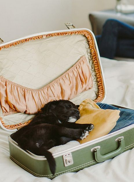 Staying at a Pet-Friendly Hotel With Your Dog? Travel Experts Answer Your Etiquette FAQs.