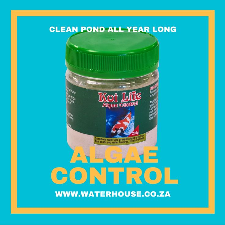 Algae Control to the rescue this Summer.