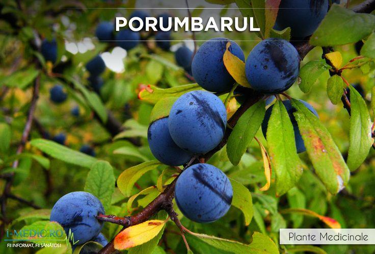 Porumbarul are proprietati ca antihemoragic, astringent, depurativ, diuretic, laxativ si tonifiant - http://www.i-medic.ro/plante/porumbarul