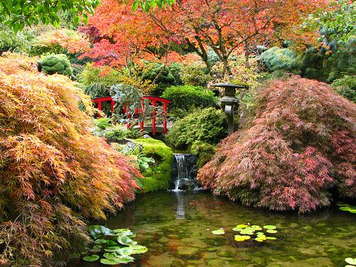 The Japanese Garden has to be my favorite spot at Butchart Gardens, Victoria.