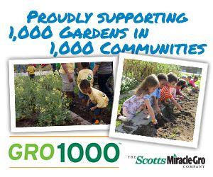 Transplanting wild black raspberries national gardening for National gardening association
