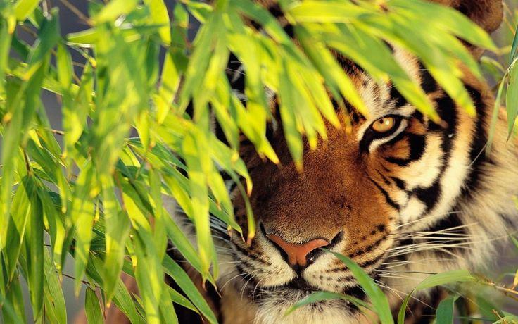 Nature Animals Wonderful Nature Animals Wallpaper 26147wall.jpg