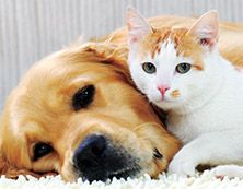 """""""Kukkia"""" Fresh Home Perfect Pet Sitruksenraikas verbena yhdistyy kukkaistuoksuihin ja tuo pirteää raikkautta lemmikkikoteihin."""