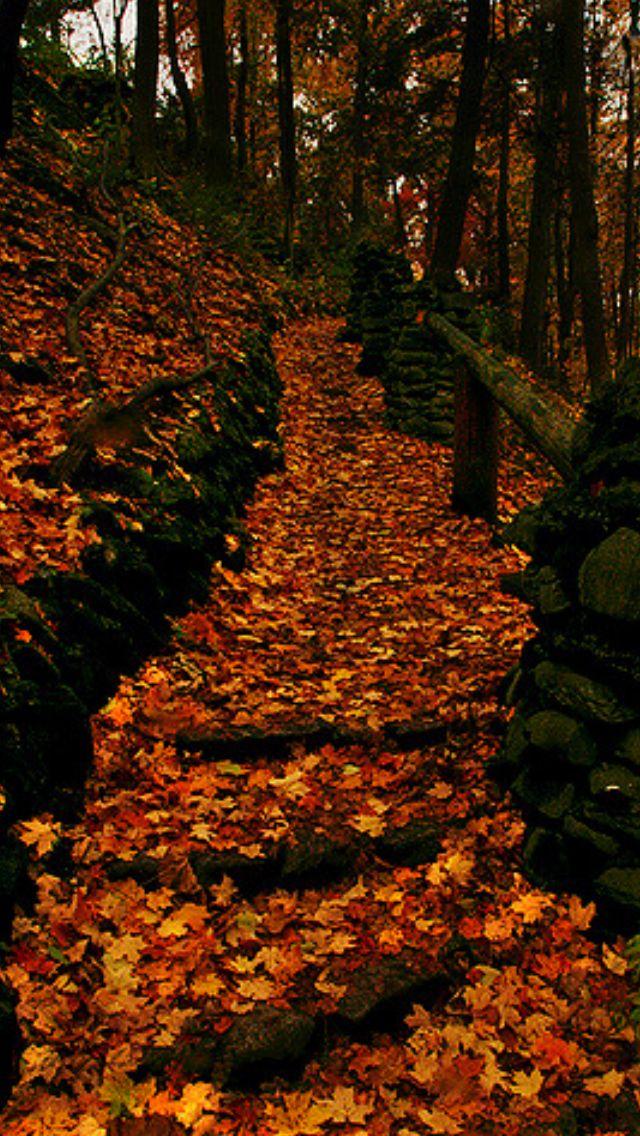 Akron Autumn Pathway Source Flickr.com