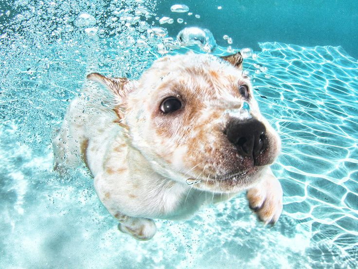 11 Ridiculously Adorable Pictures Of Puppies Having Underwater Swimming Lessons
