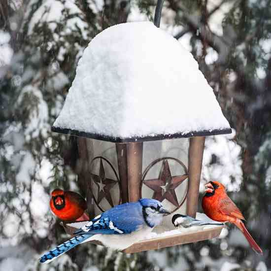 Winter Bird Feeding : Most species of small birds need to eat one-third to three-fourths of their body weight daily to survive during the colder months. A good feast is far more difficult to come by this time of year, though, and that's where we humans come in. Here's how and what to feed our feathered friends as winter settles in.
