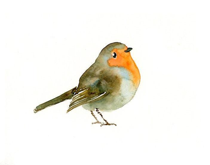 oiseau aquarelle