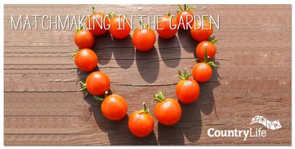 Companion planting is one organic way to help protect your vegetables from the threat of pests, and can help improve the growth of your crops. Read Angela's blog on companion planting and allow happy relationships lead to success in your garden this year!