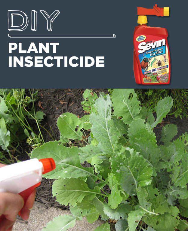 Insecticida para plantas hecho en casa