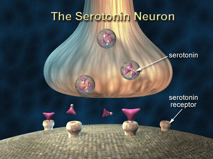 Beyond Meds and anyone who's actually paid attention to the science for the last many years has known that the serotonin myth about depression and how antidepressants work has no evidence to back i...