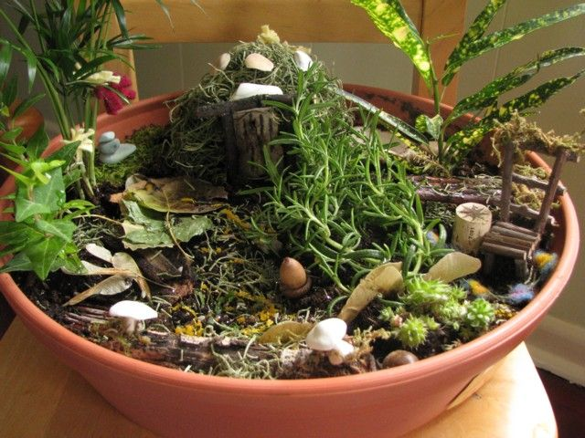 1000 images about Indoor Fairy Gardens on Pinterest Gardens