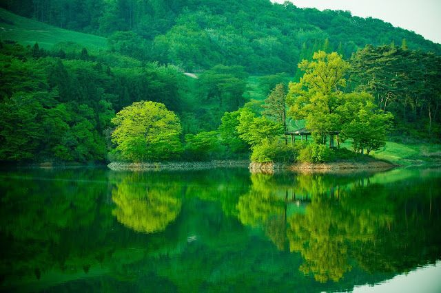 Kehijauan Musim Panas di Korea
