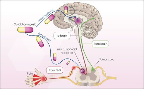 Opiates work in certain areas of the CNS.  My post explains...
