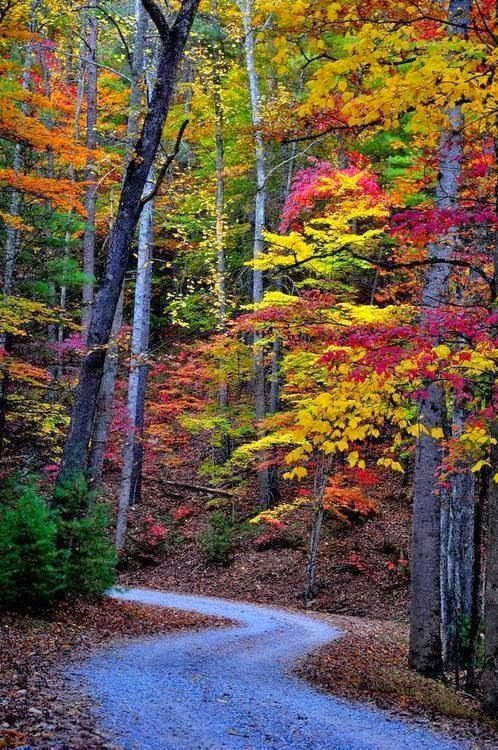 Autumn, Great Smoky Mountains, Tennessee