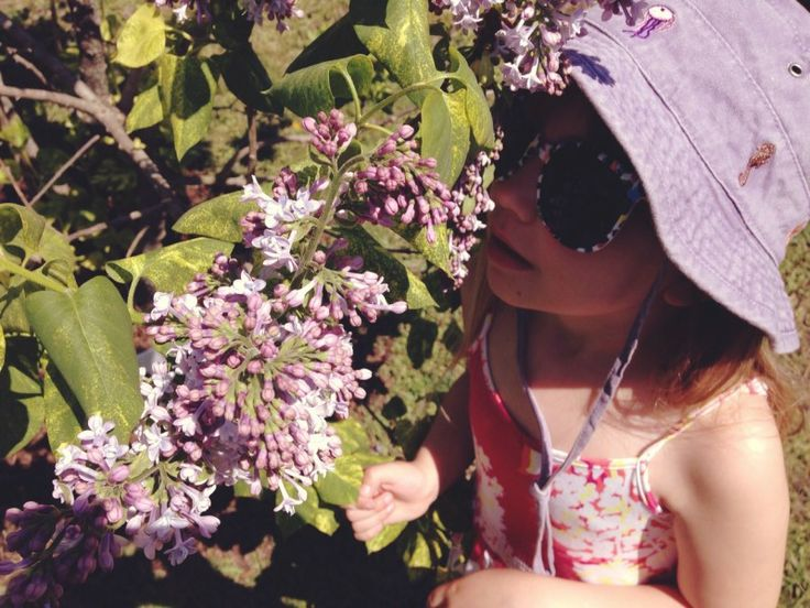 A Sunny Afternoon At The Warkworth Lilac Festival: Warkworth, Ontario