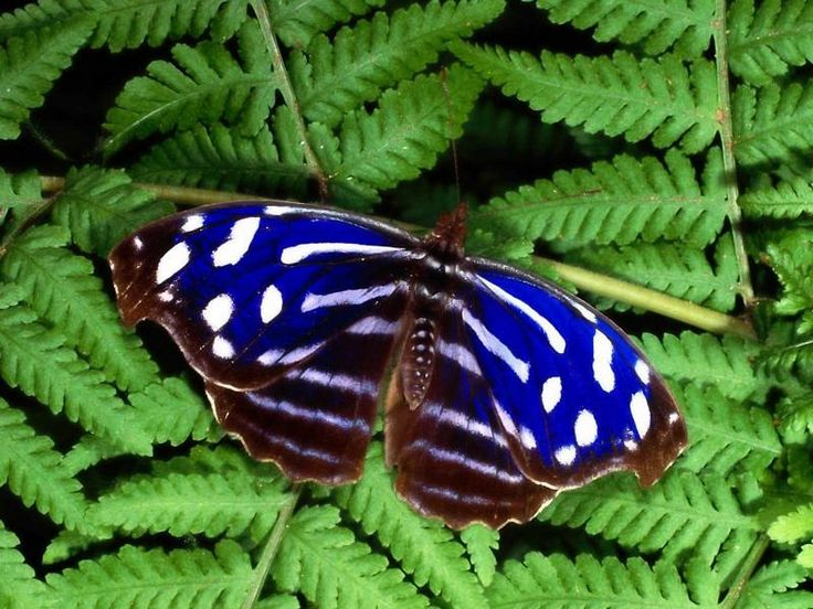 117 Best Images About Butterflies On Pinterest