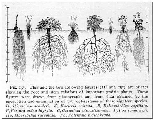 Name Root: 7 Best Physical World Info Images On Pinterest