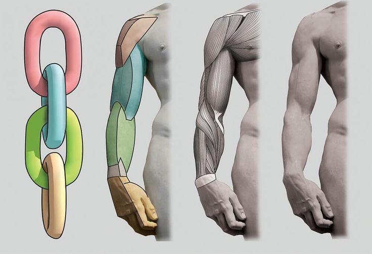 [GW直前スキルアップ応援特別企画]アナトミー編 『スカルプターのための美術解剖学』より   特集   CGWORLD.jp