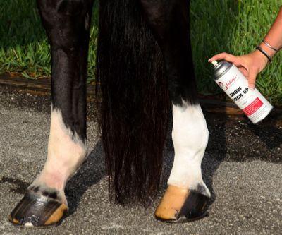 Pro Equine Grooms - Horse Show Hacks