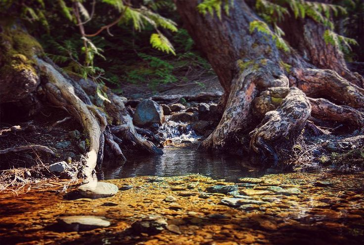 Tiny stream feeding into Cameron Lake. #explorecanada #explorebc #explorevancouverisland #lake #stream #vancouverisland by karlatbeyondmacro