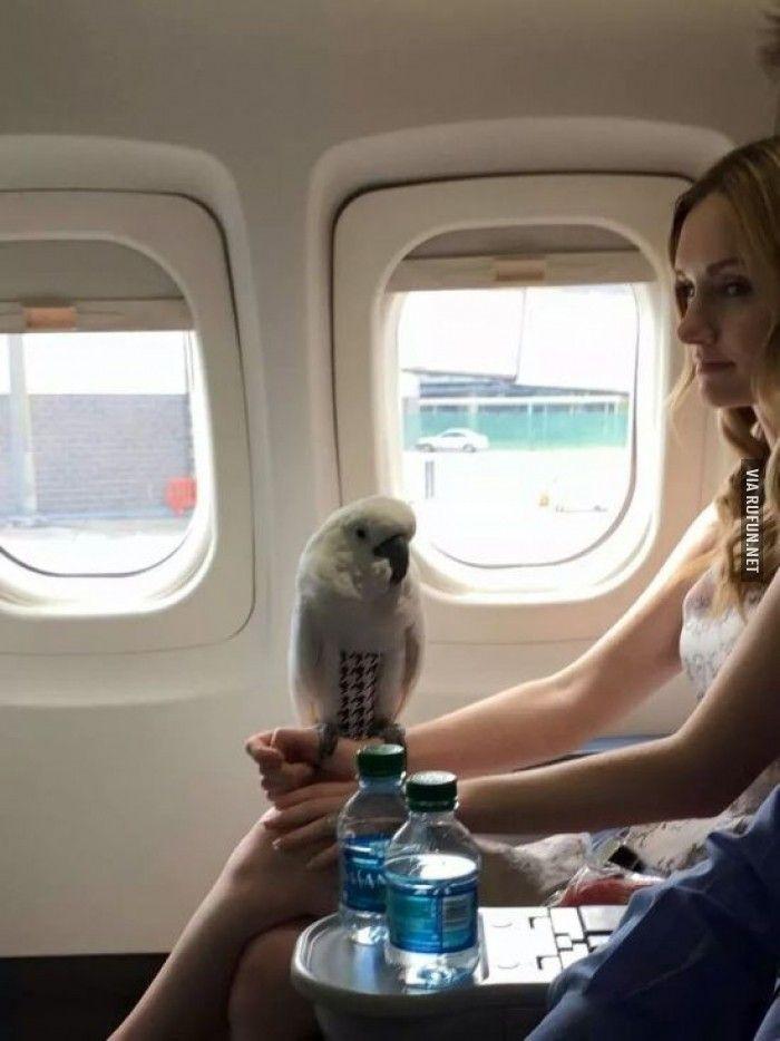 С попугаем в самолете #попугай #самолет #девушка   Самолет ...