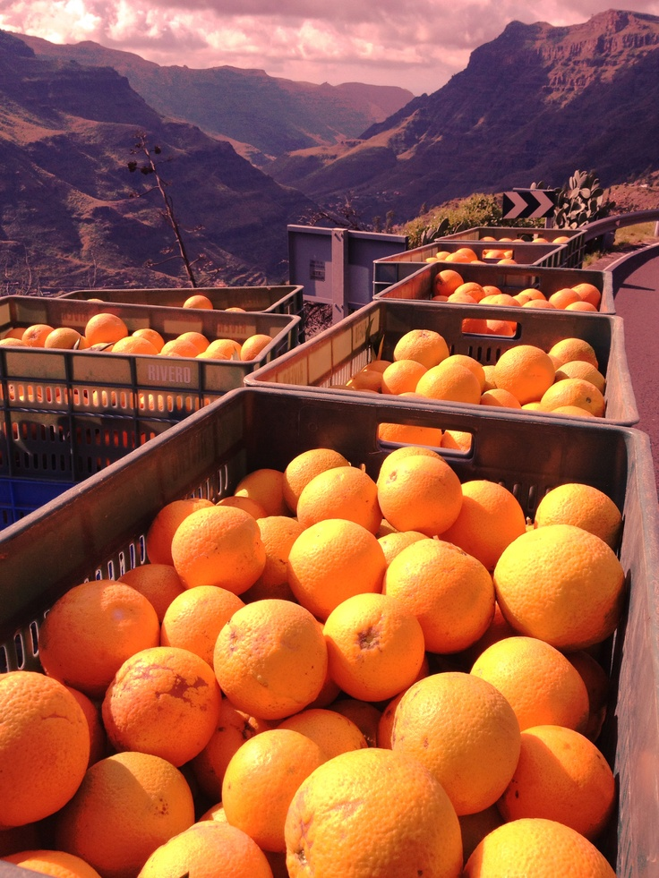 Where oranges come from!