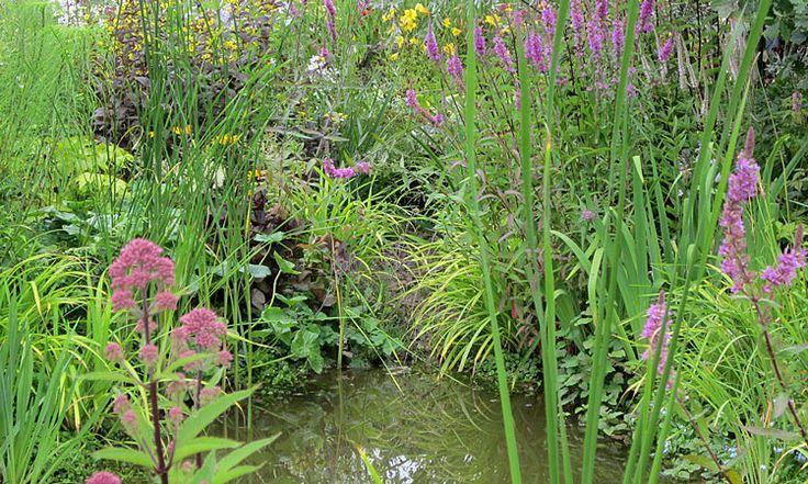 How to plant a pond to create a wildlife habitat plant for Design criteria of pond