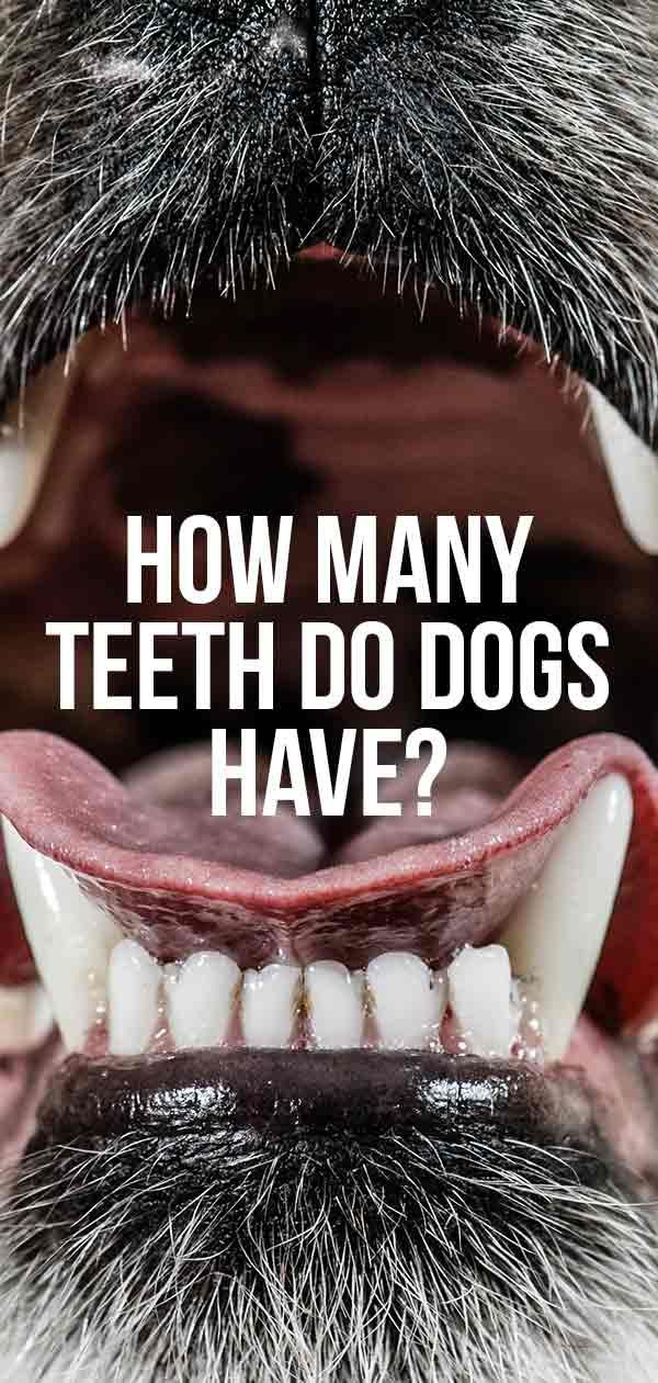 Pin By Shannon Tipton On Animal Crackers Pawsitively Precious Dog Teeth Cleaning Dog Teeth Dog Care