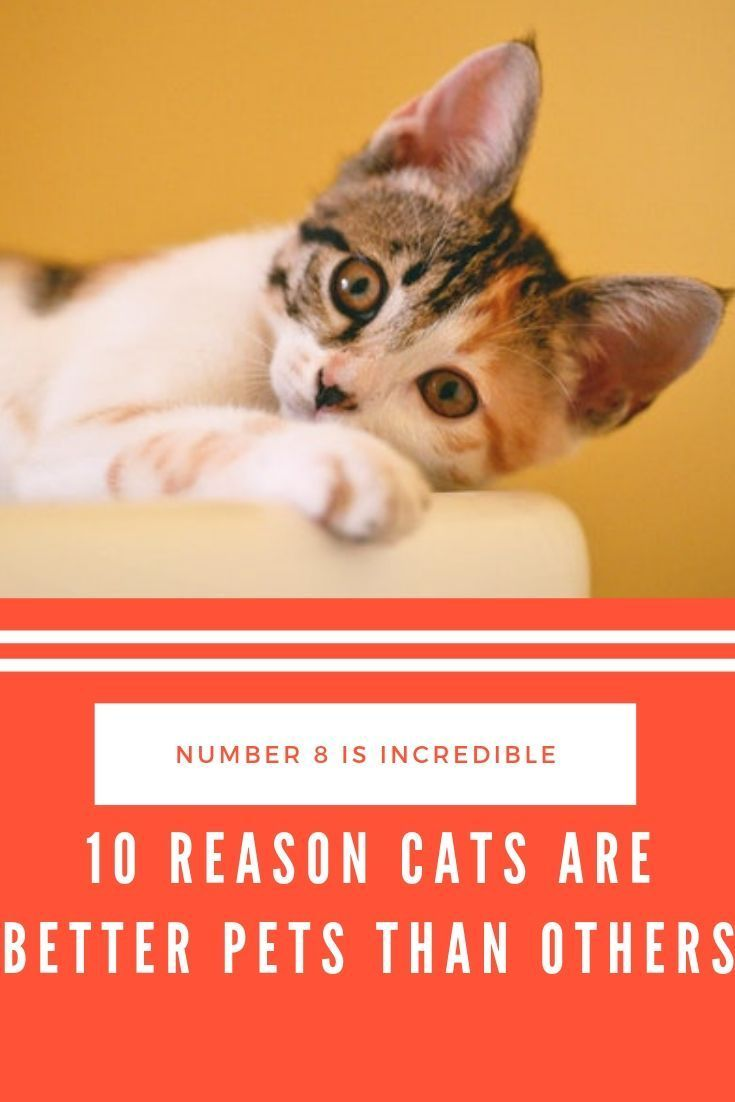 10 Reason Cats Are Better Pets Than Others Cats Pets Kitten Cartoon
