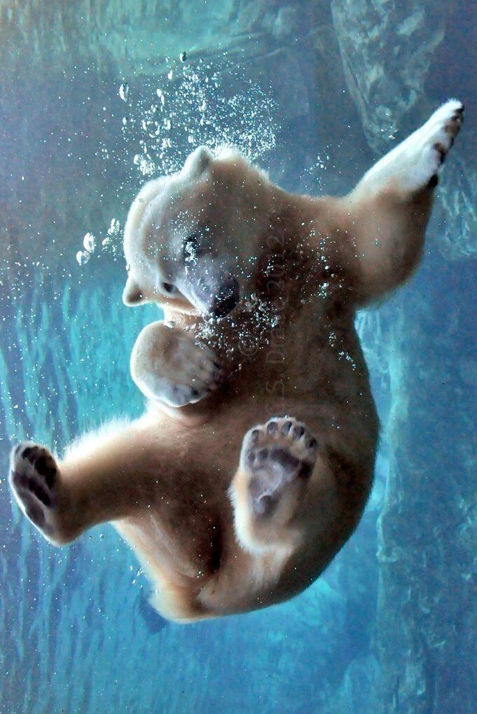 polar bear   Bears most white   Cute animals, Animals ...