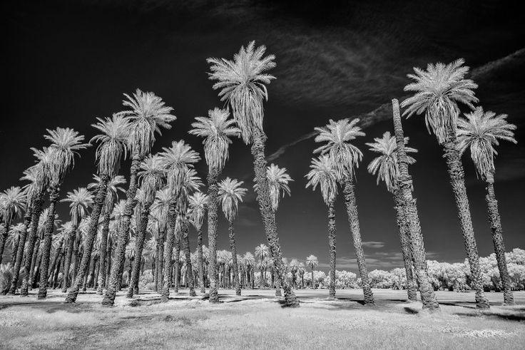 Death Valley Infrared (19)