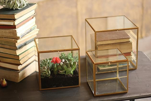 Three glass display boxes showing decorating ideas that include plants and books