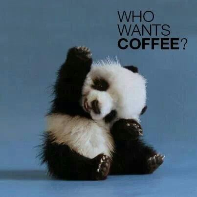 Coffee and pandas. What more could you ask for?