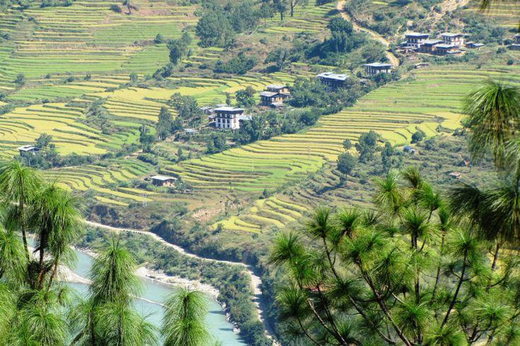 Butão: cultivo orgânico e saúde socio-ambiental   #AlimentosOrgânicos, #Butão, #CultivoNacionalOrgânicos, #CultivoOrgânico, #DanielleNierenberg, #KremenaKrumova, #NutrindoOPlaneta, #ProduçãoNacionalDeOrgânicos, #ProdutosOrgânicos, #WorldwatchInstitute