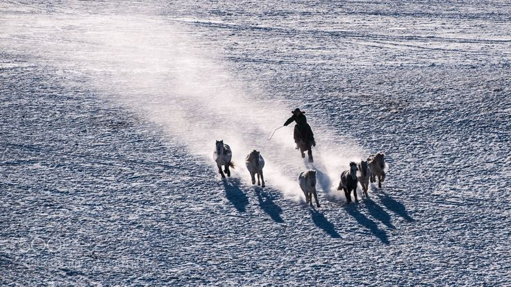horse (Laojing / CHINA) #nikon D3X #animals #photo #nature